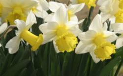 「食卓に飾るのは危ない!」一見美しい花が毒をもっていることも