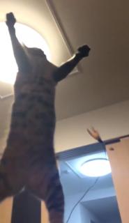 【にゃーん】猫ジャンプのスローモーション動画が迫力満点