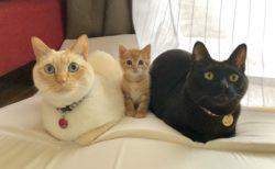 【きゃわわ】仲良しの三匹の猫に癒される(*´ェ`*)