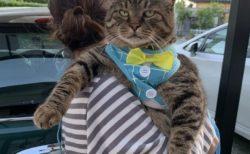 「ニャンコデラックス!」デブ可愛い猫がたまらない