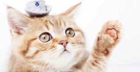 『植木鉢の横にパン!?』 → 食パンになった夢を見てる猫が話題