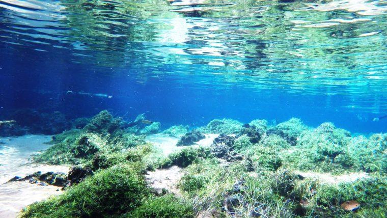 【幻想的】世界一透明度が高い「プラタ川」が氾濫。そこには理想郷があった!