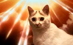 【話題】「進撃の巨猫が登場!」奇跡的な出来事にびっくり!
