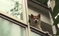 「こんなんされたら一日中ハッピー!」お見送りしてくれる犬が可愛すぎる