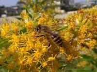 持ち主不明のお墓に蜂が発生→住職がSNSで「嫌だなぁ」と発信したら素敵な展開に