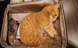 旅行についていきたいイヌ・ネコたち。かばんにすっぽり入ってしまう姿が可愛すぎ!