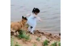 【泣いた】ワンコ、少女が海に近づいた瞬間少女のスカートを引っ張り引き倒して自らボールを取りに海へ