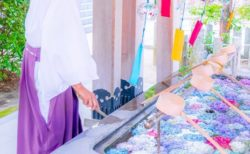【神社】イケメン宮司さんによる「手水舎のあじさい」息をのむ美しさ
