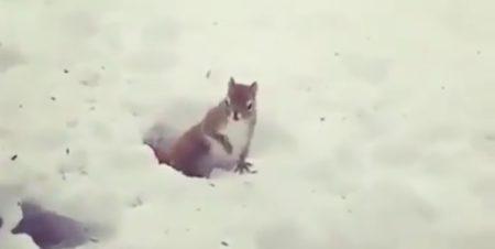 【ブルブルガタガタガタ】冬眠中に起きてしまったリス・・かわいすぎる!