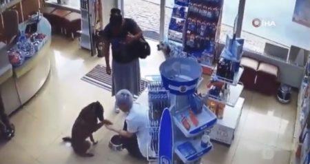 """薬局に来た野良犬がしきりにお手を… ごはんをあげようとした店主が""""あること""""に気づく"""