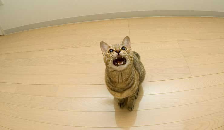 【ひんやり】全然構ってなかったら・・・まさに「スーパードライ」な猫が完成!