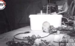 作業台を散らかしたまま翌朝を迎えると、いつも勝手に片付けられている… → 監視カメラを設置した結果!