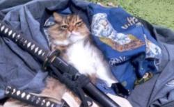 【話題】猫ちゃん、サムライに化けるも変身が解ける「バレてしまったか」