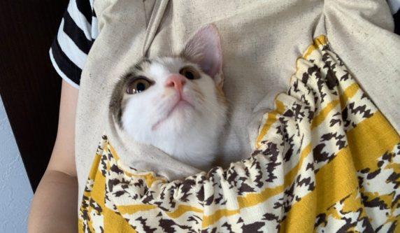 【にゃ~ん】「かわいい!」猫のために作った抱っこ紐にすっぽり