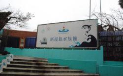 【香川】新屋島水族館の「イルカショー」会場の熱気や雰囲気がすごい!