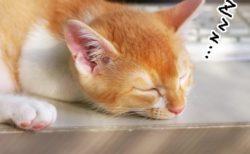 「6時間以内の睡眠は徹夜と同じ」 8時間は確保したい・・・