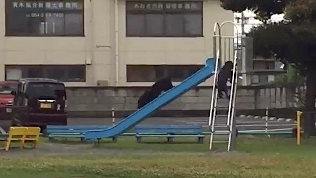 公園で犬が滑り台してた!『ちゃんと順番守ってる』『頭の良いwww』