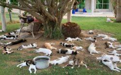 【猫パラダイス】猫の楽園が存在した
