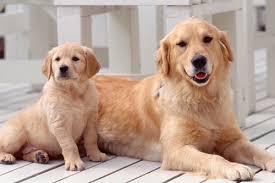 【ドラム】飼い犬と音楽セッション!リズム感どうなってんの・・・