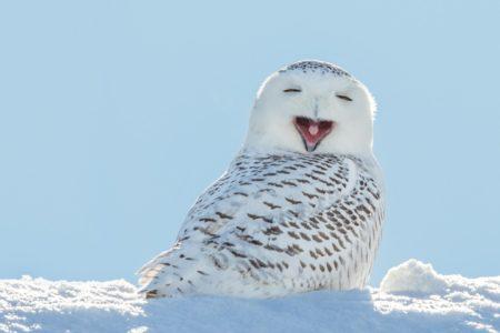 【フクロウ】鳴き声が完全に「美輪明宏」な子が見つかる!思わず吹いてしまった・・・