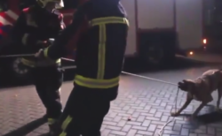 【ヘルプ】消防士の「作業」に犬が参加。勇敢な彼に拍手を!