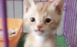 """""""仁王立ち""""する子猫が可愛すぎる!『凄いバランス❗』『前世が人間』"""
