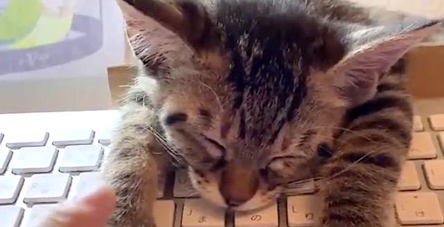 『なんでそこで寝るんですか…』キーボードの上で寝てしまう猫が可愛すぎる♡