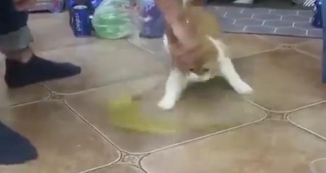 『なにそれ可愛い!』 おもちゃを高速で振った時のネコの動きが凄い!