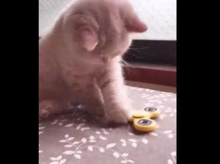 【猫】ハンドスピナーで遊んでるうちの子が可愛すぎる。マジで必見!