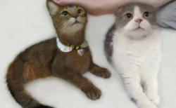 【猫】とてつもなく可愛い猫にネット民首ったけ