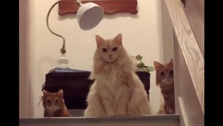 お上品な3匹の猫が話題!『高貴さを感じる…』『これは間違いなくロイヤル』
