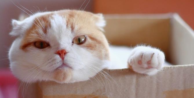 【猫様】どうみても寝るの「逆」だろ!犬くんが可哀想だ・・・