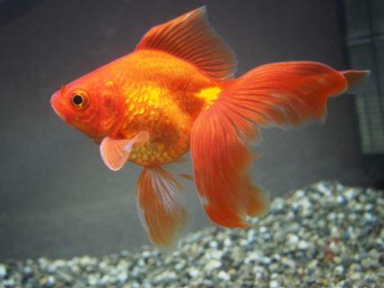 【驚愕】電話ボックスで「金魚」を飼っている場所を発見!