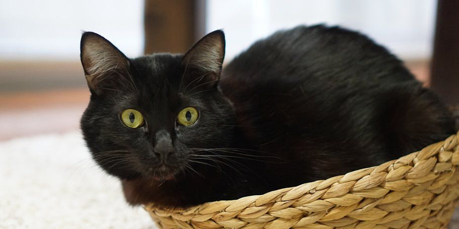 【耐久】お兄さんの黒猫は、好き放題やられても我慢します。絶対に怒りません!