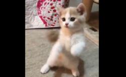 【子猫と遊ぼう!】こんな暑い日は家で猫と遊んでいたいよね