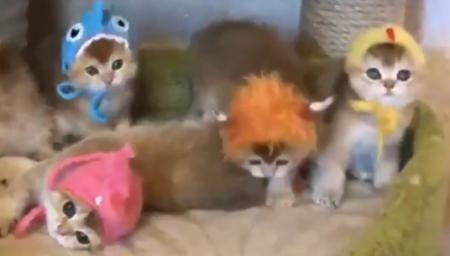 【猫パラダイス】子猫と帽子の組み合わせが最強すぎた・・・
