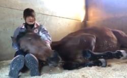 【安らぎ】お馬さんが甘えん坊で可愛すぎる『こっちも癒される』『ほんわかした』