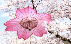 【傘日和】こんな『和傘』見たことない!あまりの美しさに心躍る!