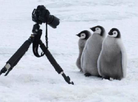 ペンギン、警戒心が全く無かった!カメラマンに近づく姿が可愛すぎる