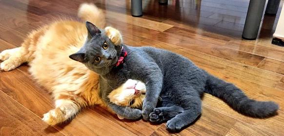 「捕まえたにゃ!」猫が猫を現行犯逮捕する奇跡的な瞬間を激写!