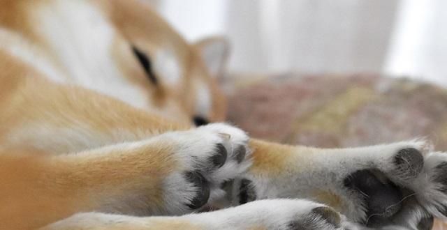 見てるだけで癒される♡ 幸せを満喫している柴犬にメロメロ♡