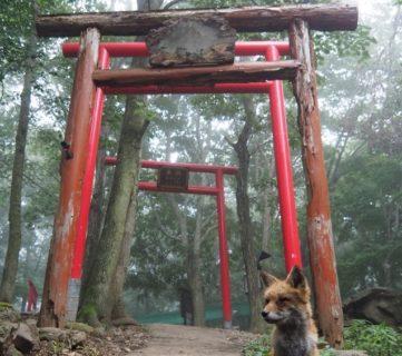 【話題】奇跡的な狐・稲荷神社・霧のコラボ!!『神の使いか』『すごい神秘的』
