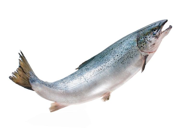 【サケ】鮭の上流行きを助ける「サーモン大砲」が予想の斜め上。色々と凄い!