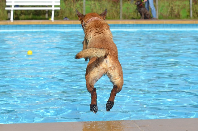 【夏】プールが大好きな犬たちの動画。わちゃわちゃが凄い!