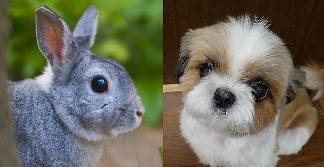 【最強コンビ】ウサギと子犬の仲良し動画‥可愛すぎるっ!!!