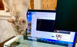 猫にキーボードを踏まれないための工夫をしたら・・・こうなった!