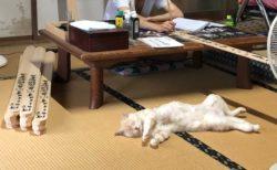 【ほっこり】卒塔婆の筆入れに忙しいお坊さん「猫の手を借りたい時のネコ・・」