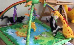 ベビージムで遊ぶ子猫ちゃんたちの動画が話題「すっごい楽しそう!」