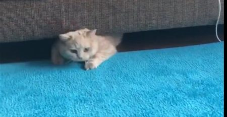 【もふもふ】連休太り?!のネコちゃんがかわいすぎるっ♡