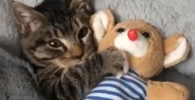 ぬいぐるみを抱いて眠りにつく子ネコの様子♡かわいすぎっ!!!!